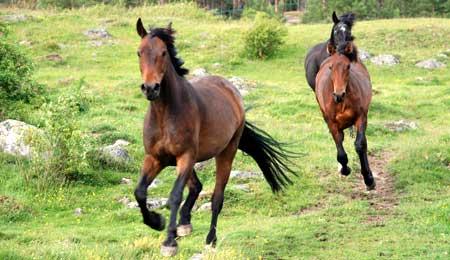 Hest fra hovedstaden nåede ikke frem til Bornholm