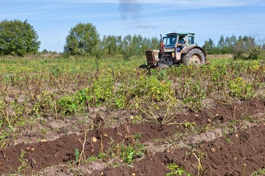 Erhverv » Fakta om det økologiske landbrug » Bornholm.nu