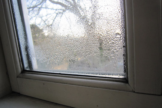 Mug på vinduesrammerne