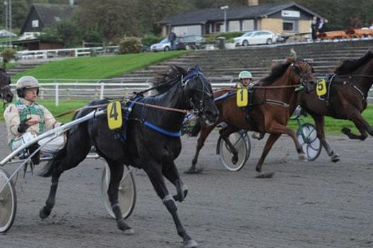 Ny hest til den nykårede kvindelige champion