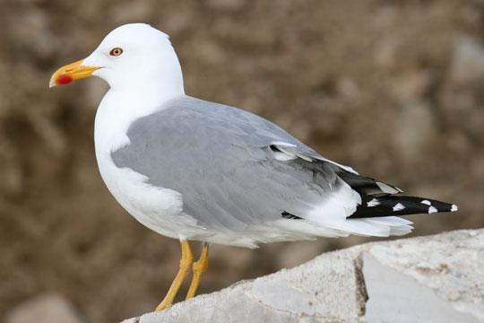 Fuglene vender den rigtige vej