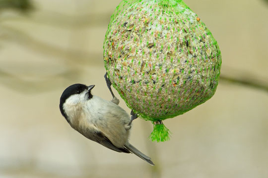 Fuglefodringen kan fortsætte