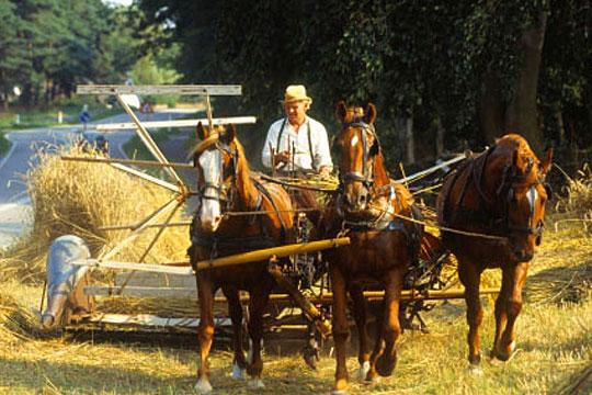 Hestekræfter fra rigtige heste