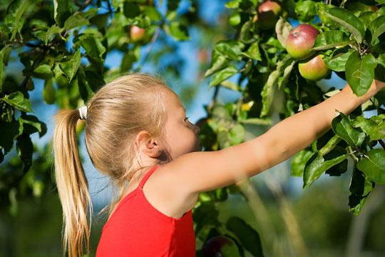 Frugt og grønt til hele vinteren