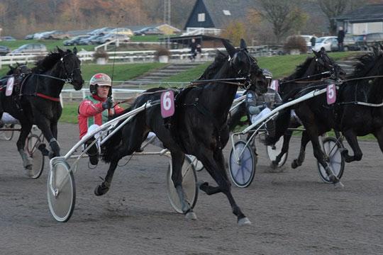 Rekord mange heste kan bringe bornholmerne til derbyfinalerne