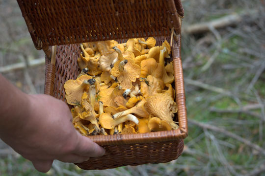 Spis kun kendte svampe