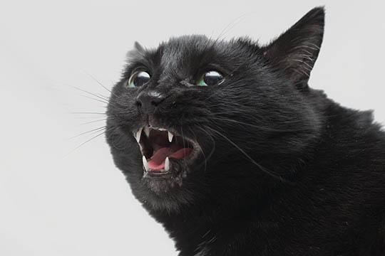 En vred kat skal lades i fred