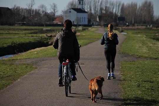 Lær hunden at løbe med når du cykler