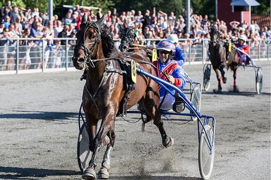 Årets opdrætter med to heste i Nykøbing F.