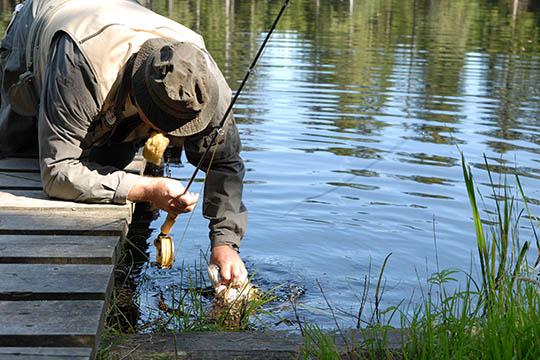 Højsæson for laksefiskeri