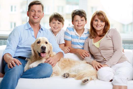 Populær familiehund i hele verden