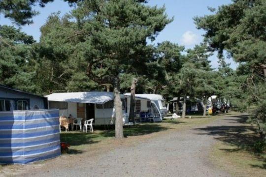 Vækst hos Dueodde Camping