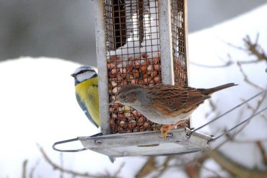 Mindre kendte fugle kommer til syne