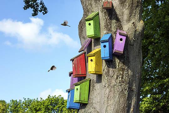 Byg til fuglene inden foråret