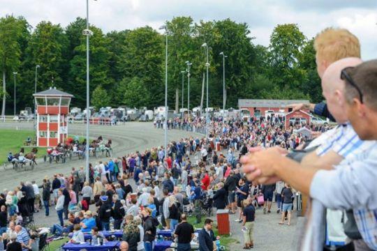 Lokale heste afgør DM for amatørkuske