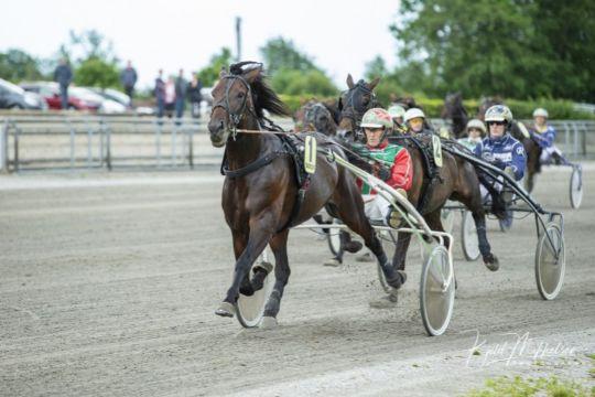 Bornholmsk hest forbedret hos Steen Juul