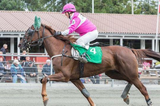 Enkelt hest i totorækken i Sverige