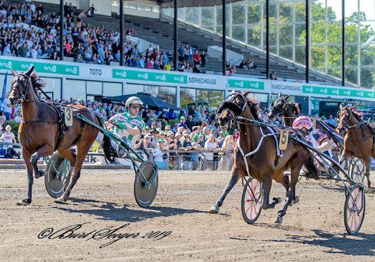 Delvis bornholmsk Hoppe Derby-vinder