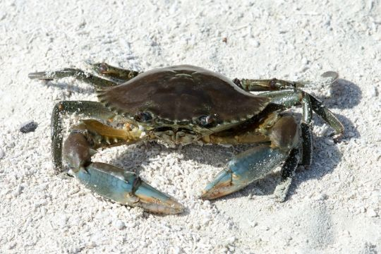 På krabbejagt ved stranden