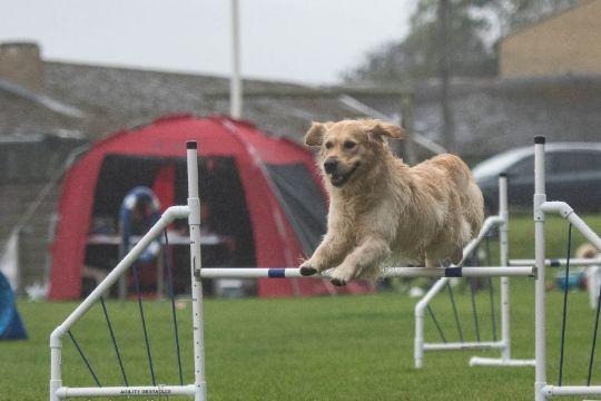 Hunde dystede om BM i agility