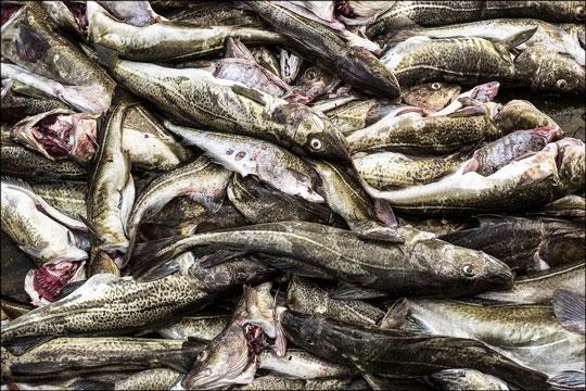 Bornholm Fisk A/S opsiger medarbejdere