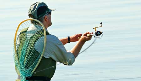Rekreativt fiskeri og torsk under pres