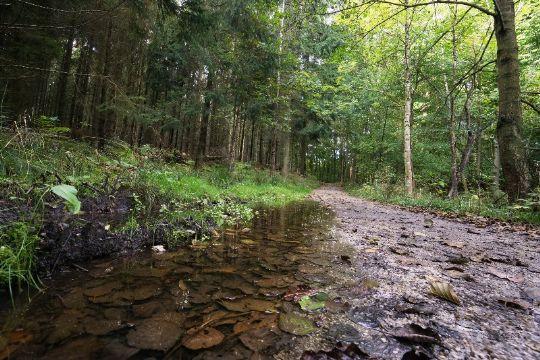 Kommunen har solgt 21 skovgrunde