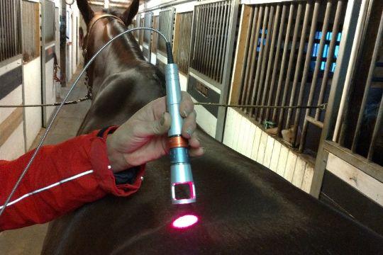 Healthy Horse behandler heste med laser