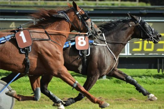 Delejet bornholmsk hest svigtede som favorit