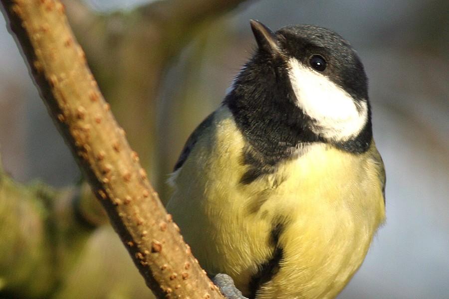 Fuglenes særlige kendetegn