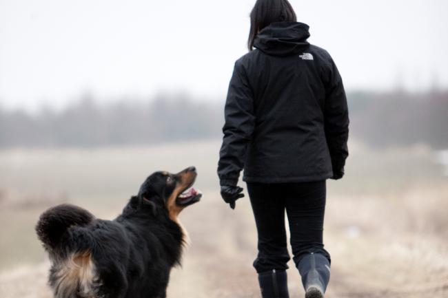 Basisregler og forbudte hunderacer