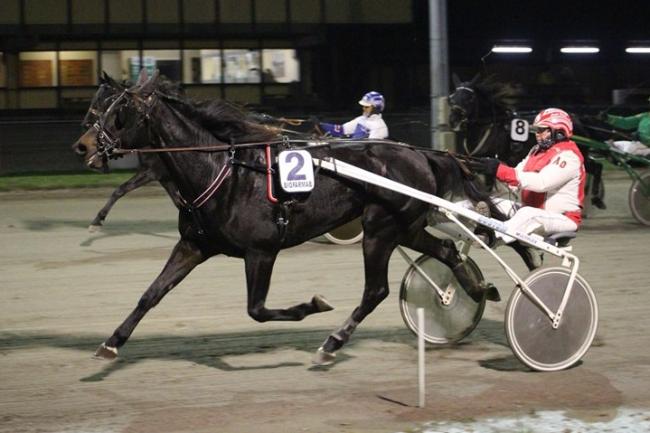 Hest choksejrede i Nykøbing Falster