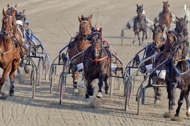 Flotte præstationer af heste i København