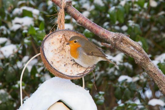 Bliv ved med at fodre fuglene