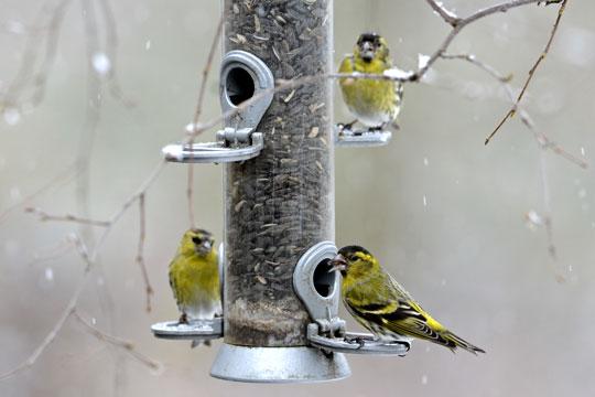 Fuglene sparer på energien