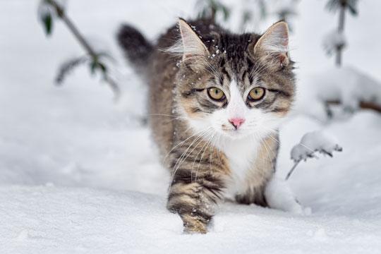 Katte og kaniner udendørs