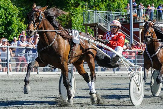 Ingen tro på bornholmsk hest i Sverige