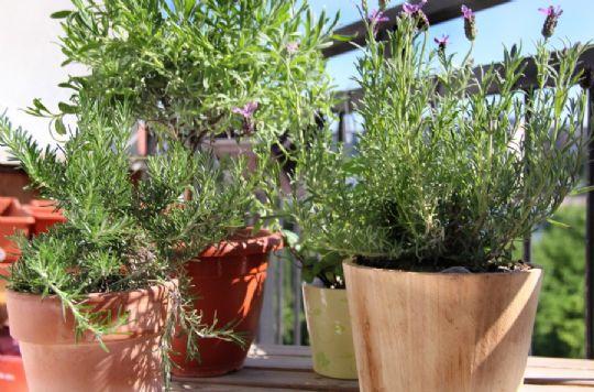 Omplantning i nye potter