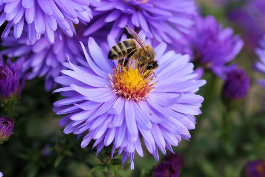 Ingen bier, ingen bøffer