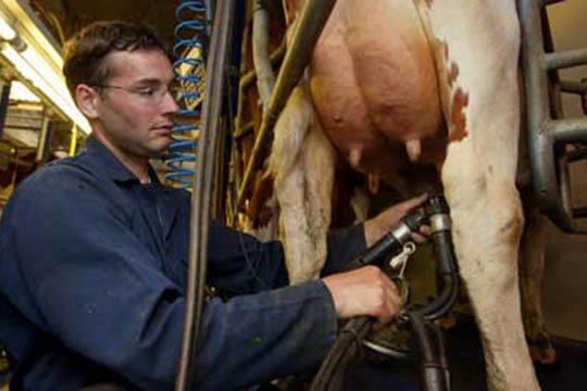 Produktionen af mælk har toppet