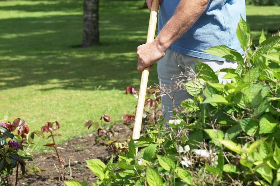 Plantetid for stauder i haven