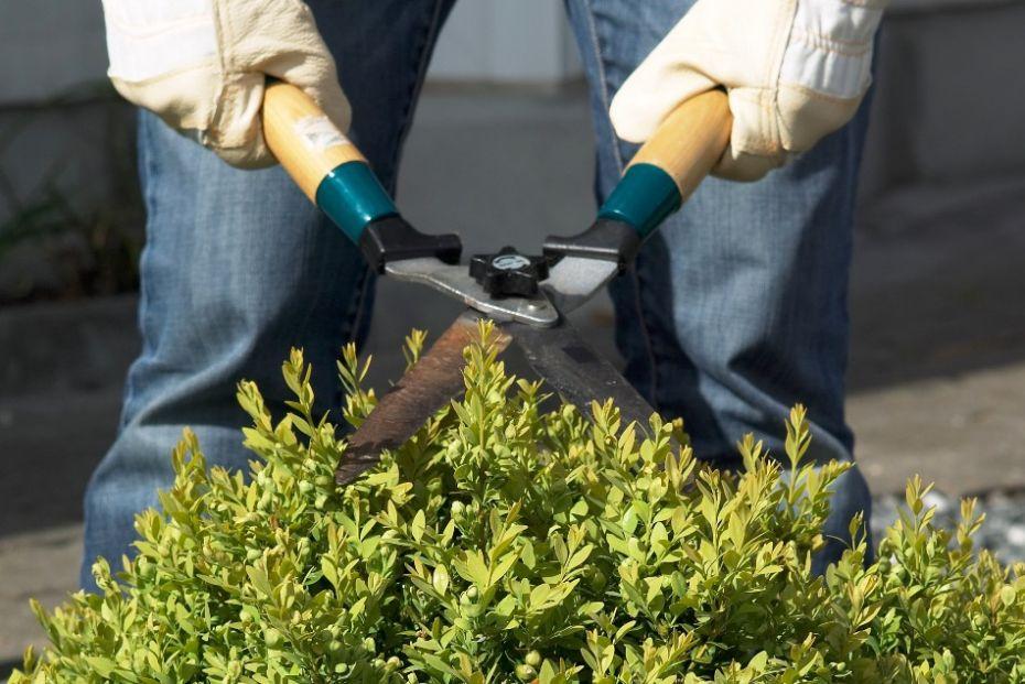 Klip busken som et kunstværk