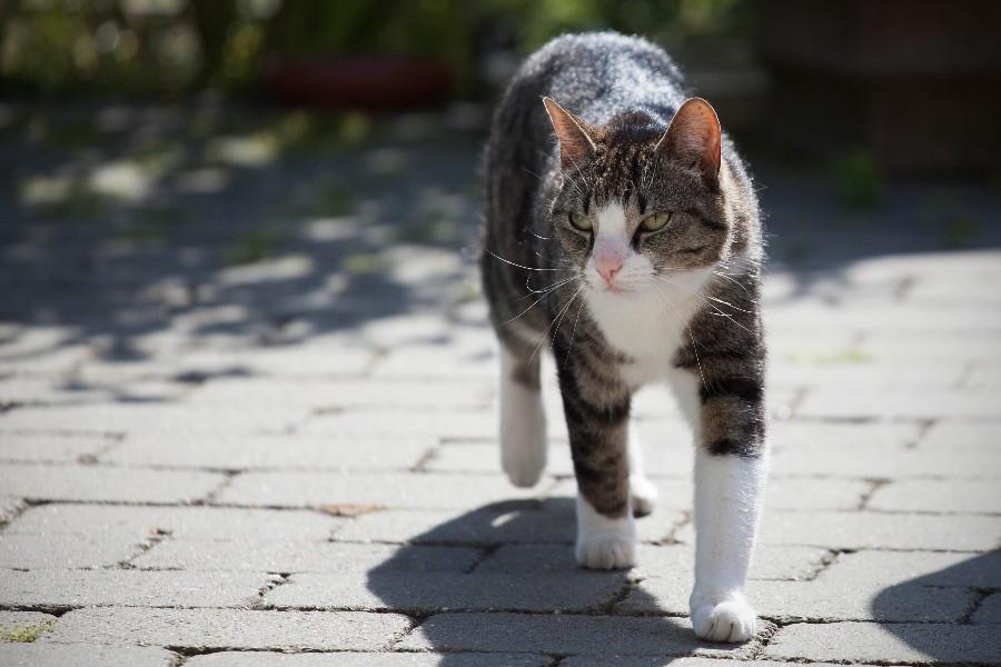 Undgå naboklager på grund af din kat
