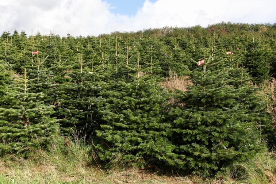 Skovbrug gav underskud