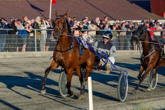Sejrshest forlader Bornholm og ny hest købt til øen