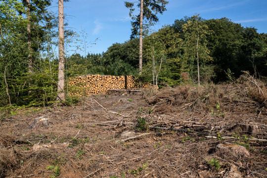 HedeDanmark satser på Bornholms skove