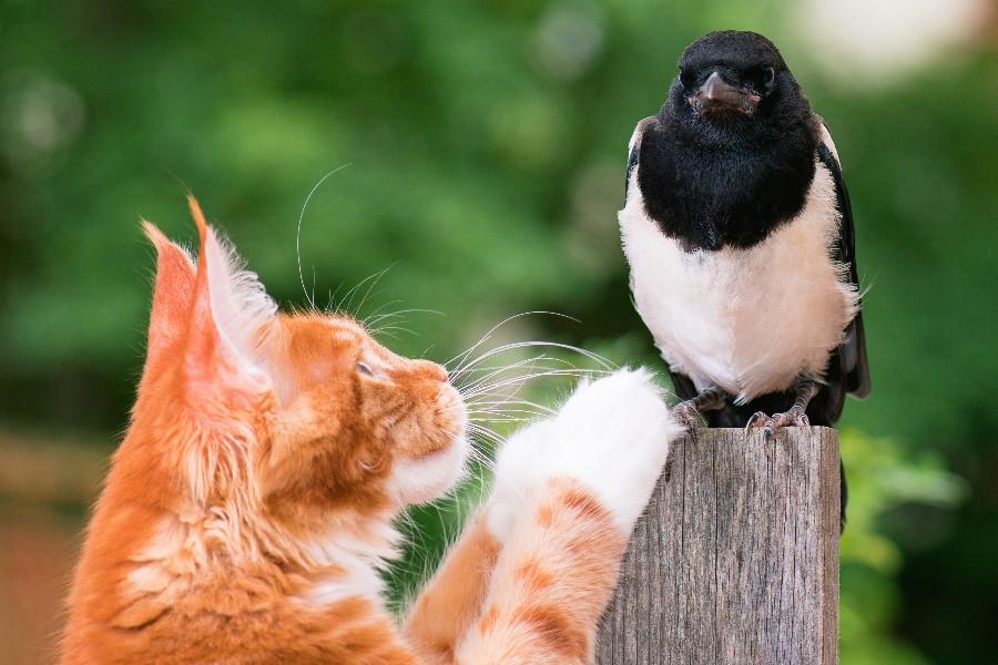 Katte ingen adgang