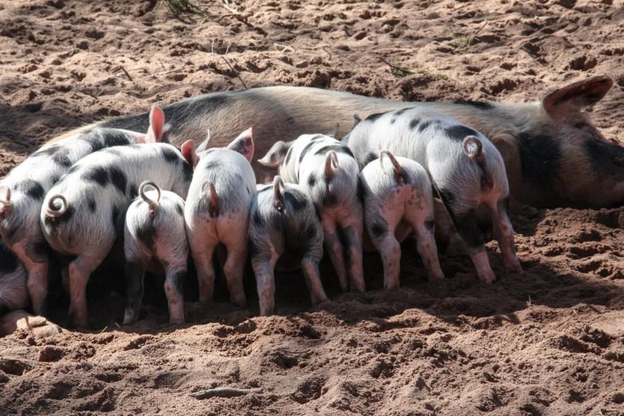 Gylden mulighed for Bornholms landmænd