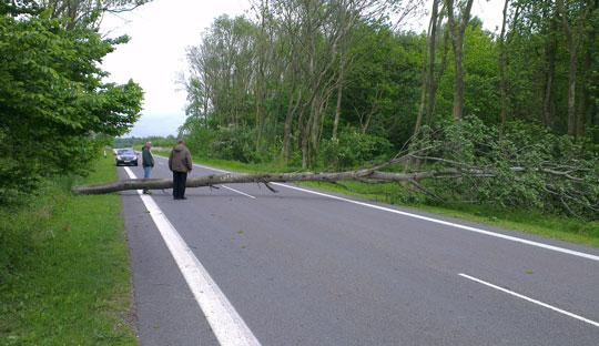 Bil påkørte væltet træ