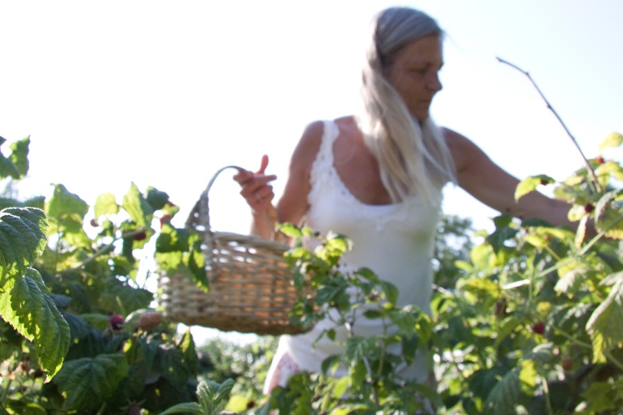 Negativ vækst for Bornholms Bær